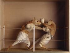 prize-fight.jpg